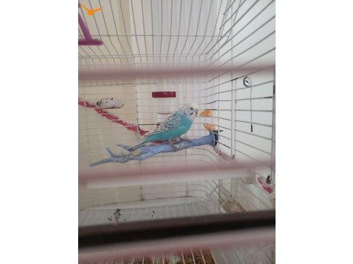 Çok sakın güzel bir kuşdur