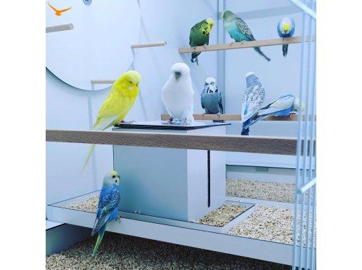 Muhabbet kuşu dünyasından rengarenk kuşlar