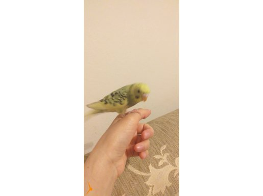 24 Temmuz 2021 doğum tarihli kuşum